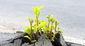 Plantje doorbreekt asfalt 1