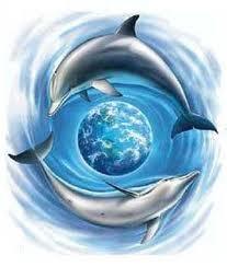 dolphinsroundtheworld